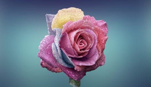 セブ島|ITパーク近くのお花屋さん|フィリピン女性に花をプレゼント